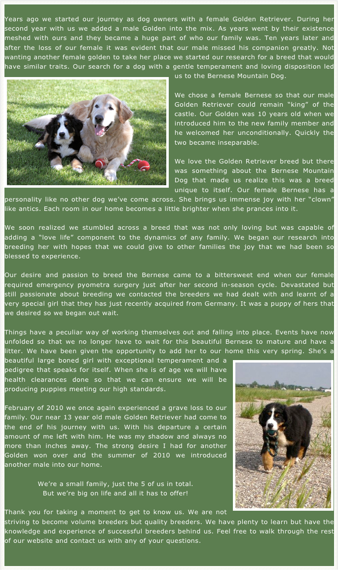 Bernese Mountain Dog Breeders - Sennenridge Bernese - About Sennenridge